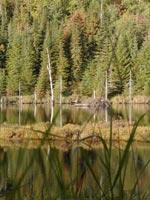 canada - québec - Un lac perdu au milieu des bois visiblement occupés par une famille de castors.