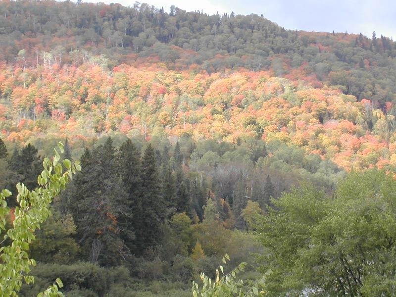Foret mauricienne en automne