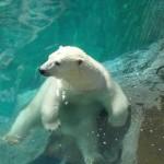 Zoo de St Félicien pour toute la famille